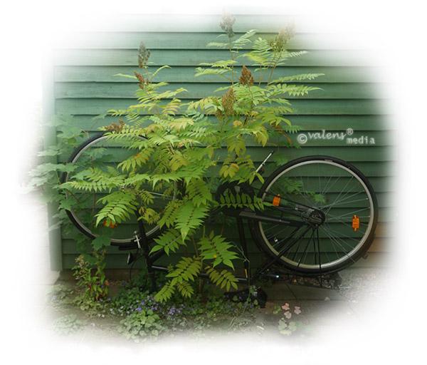 Omvänd cykel, 2012-08-05 10:36
