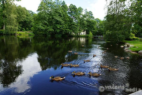 Helgasjön, Kronoberg. 2012-07-20