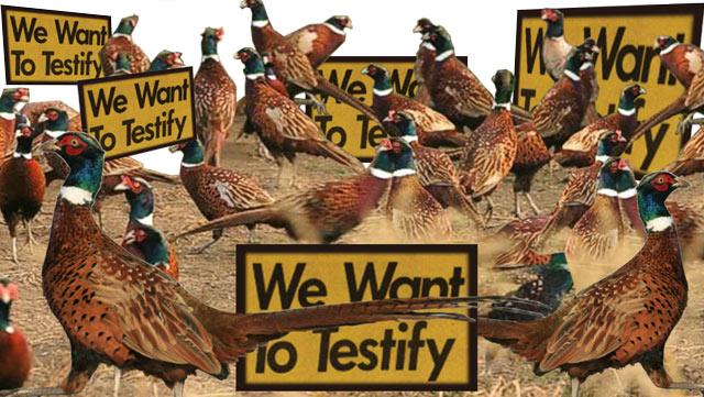 Pheasantry's revolt